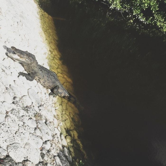 crocodile-secret-beach-villas