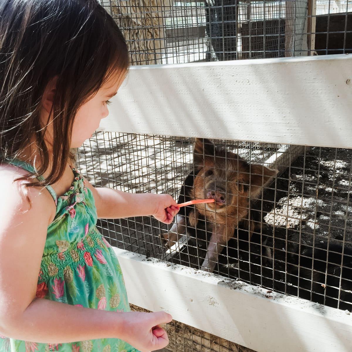 Zoomars - fun petting zoo for kids in Orange County