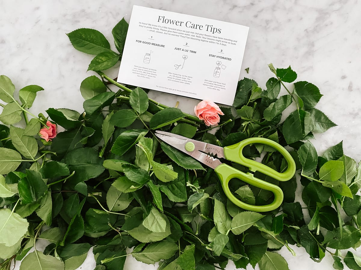flower care tips